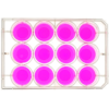 top view of a 12 well multiwell cell culture plate