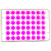 top view of a 48 well multiwell cell culture plate