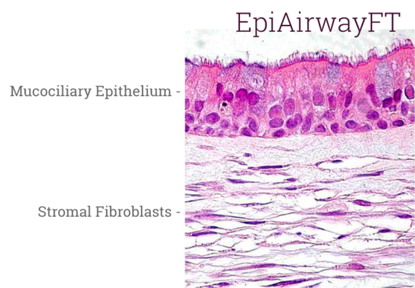 EpiAirwayFT Histology New