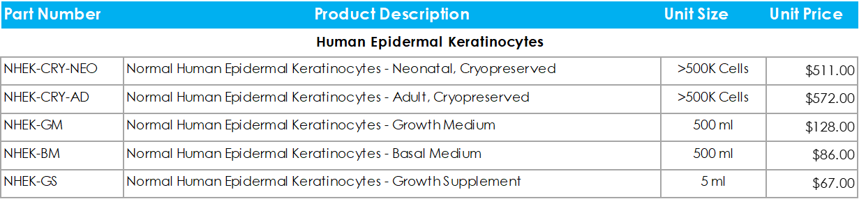 Human Epidermal Keratinocytes