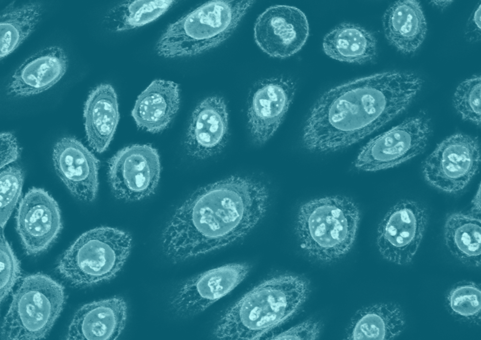 Primary Cells & Media