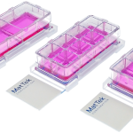 three chambered cell culture slides in 2-well, 4-well, and 8-well formats